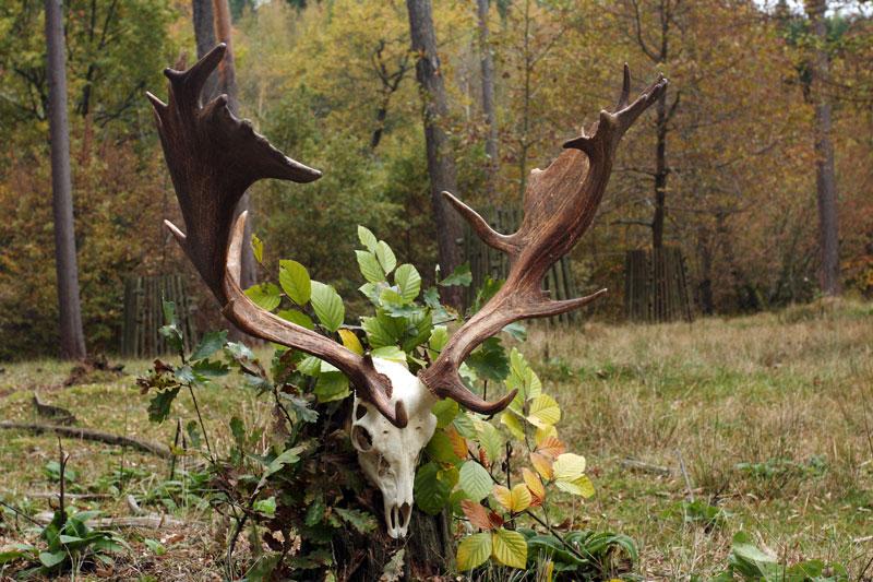 Lovci, lovy, trofeje